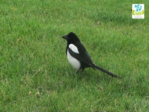 bichou-birds
