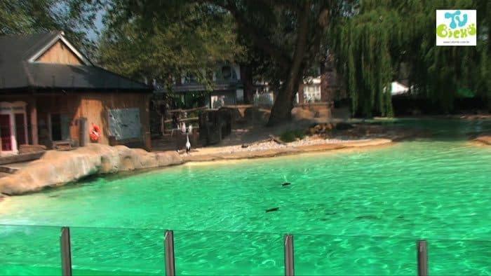 visita ao zoológico de londres