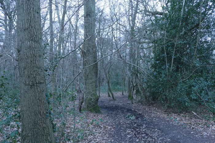 petts wood forest