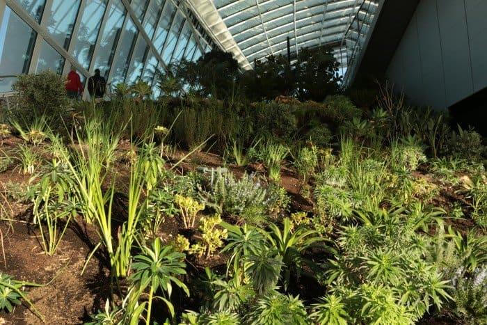 O jardim mais alto de Londres Walkie Talkie Garden