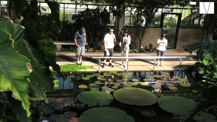 o jardim botânico de londres