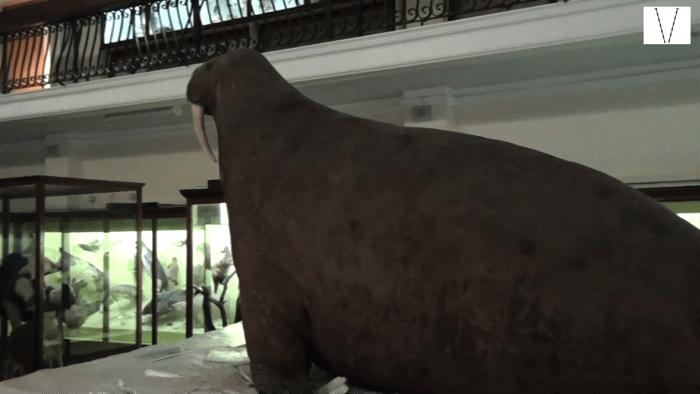 museus alternativos em londres
