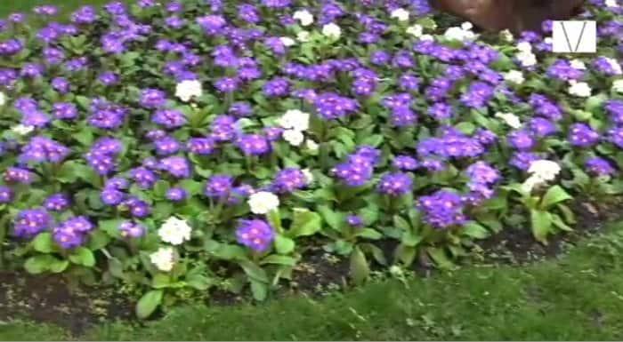 flores em mount street gardens