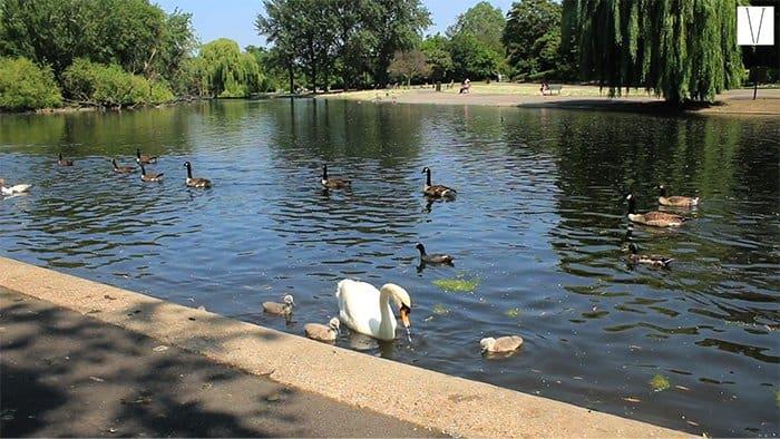 lago do regent's park londres