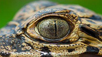 fotografias da fauna brasileira