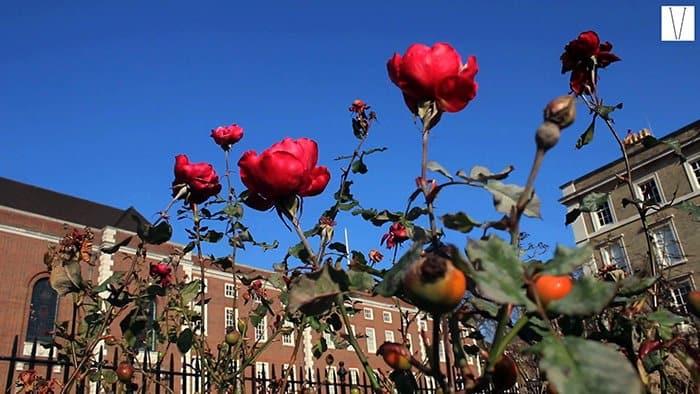 rosas no temple garden chambers