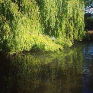 agua que te quero verde