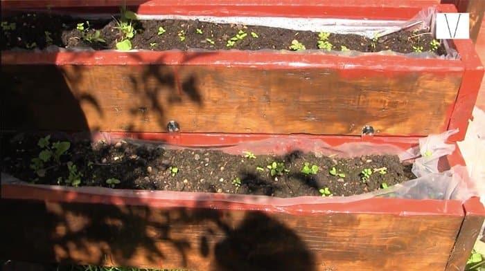 cultivar horta em casa
