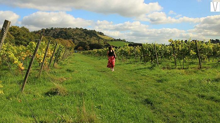 vinhos ingleses