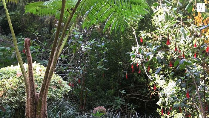 jardins do monte